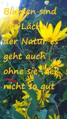 Besonders gelbe Blumen sind für die Hummeln und Wildbienen sehr attraktiv..also dann bekommen si ...