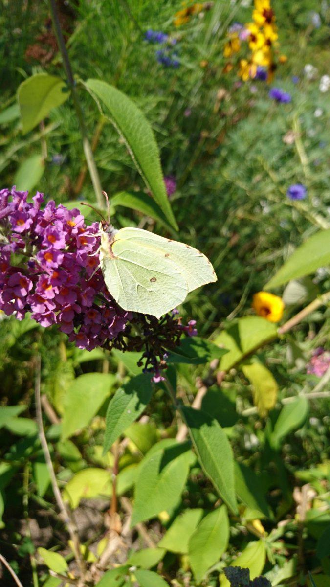 Auch die Schmetterlinge werden satt.:)