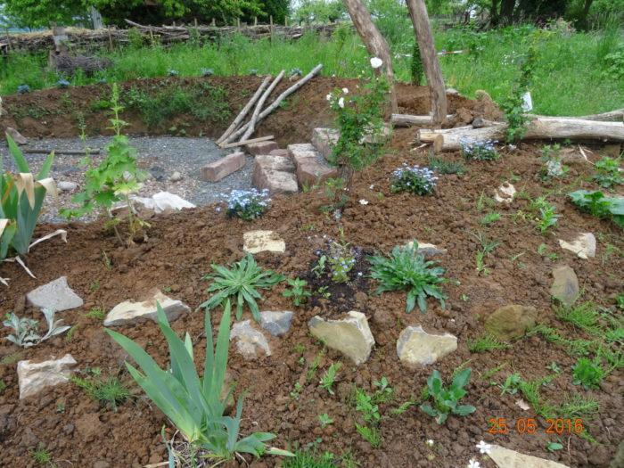 Die Außenanlagen unseres Gartenrondells haben wir bepflanzt