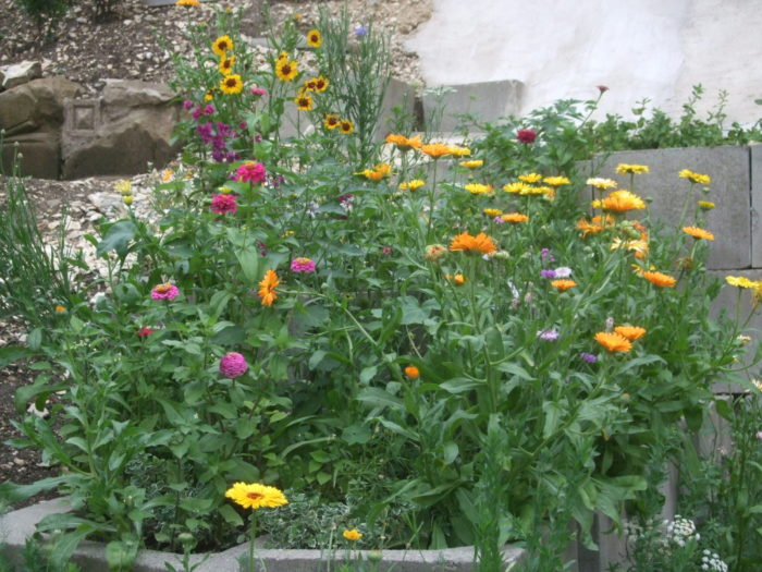 Wildblumenmischung lässt den Garten leuchten
