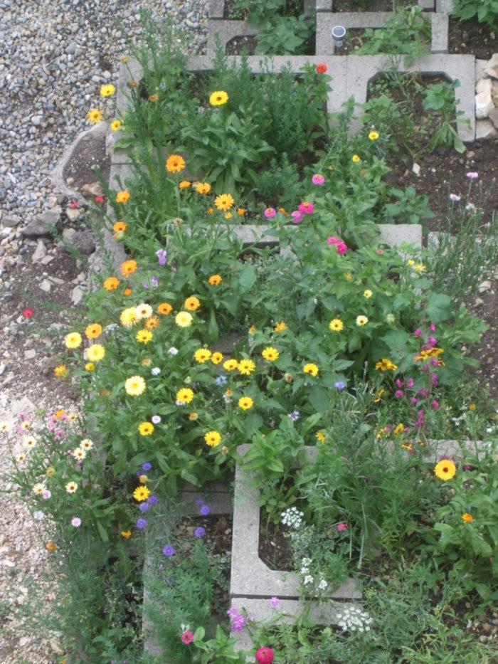 Bunte Blumenpracht