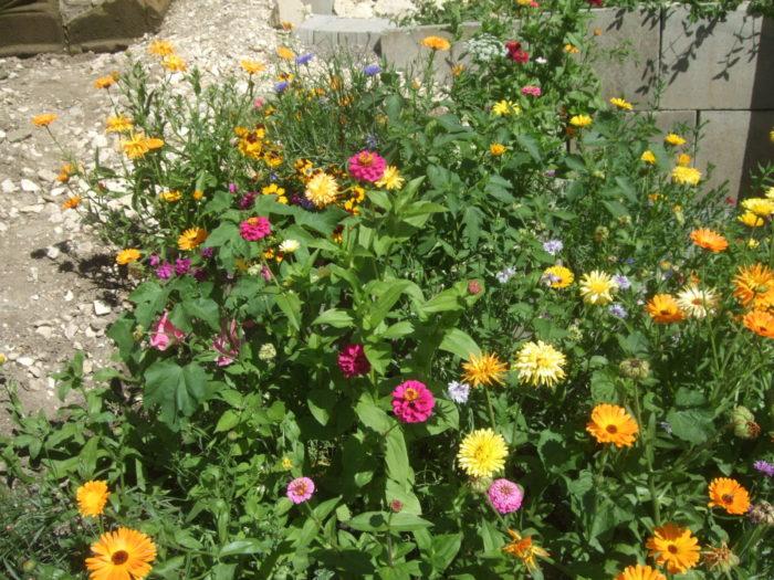 Es kommen immer mehr Blüten