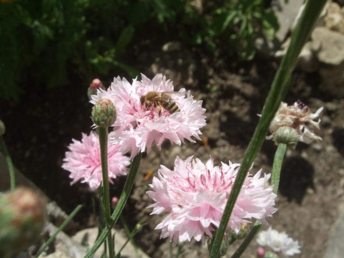 Und noch ein Bienchen