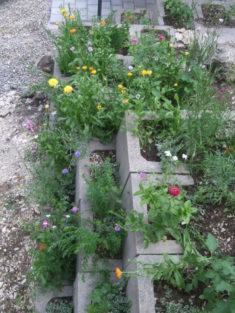 Bepflanzten U-Steine