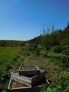 Permakulturbeet im Frühjahr