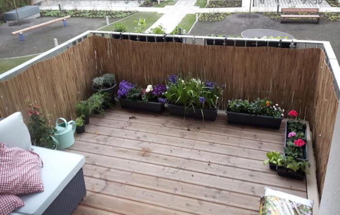 Anfänger-Frühlings-Balkon, Ende April