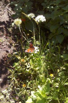 Insektenparadies Schulgarten
