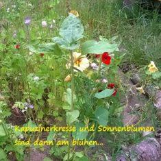 Blüten im Juni im Bienenkreis