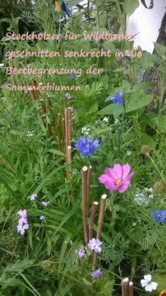 Wildblumenwiese im Juni