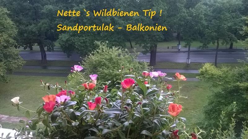 Nette`s Wildbiene Tip