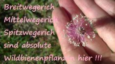 Magerasenpflanzen mit Heilwirkung