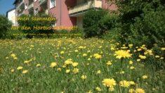 Wildbienen Lieblingspflanzen..