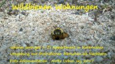 Mein Buch Wildbienen Wohnungen Dokumentationen aus dem Hortus Nette Urban Sky und dem Hortus SaBiene