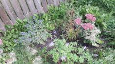 Einige unserer blühfreudigsten Pflanzen Ende September