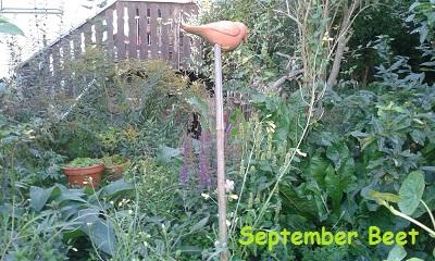 Kräuterbeet im September Wildniss pur