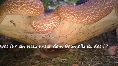Pilze im Ökosystem !