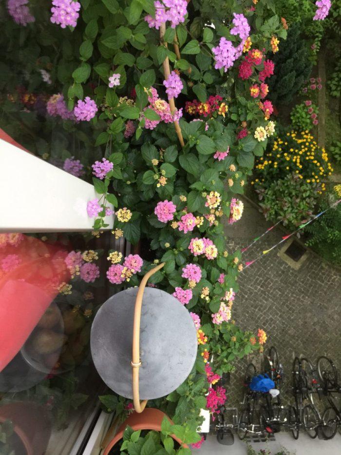Zwei von meine 9 fensterblumenkasten