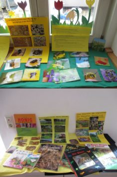 Wissen über Bienen