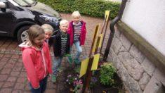 Die gepflanzten Blumen werden betrachtet
