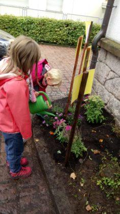 Die gepflanzten Blumen werden gegossen