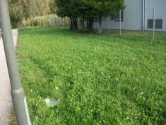 Diese Rasenfläche soll eine Bienenweide werden