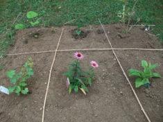 9 Heilpflanzen zieren unser Beet