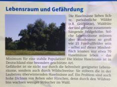SWV: Haselmaus und Golfplatz ?