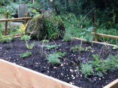 Hotzenald Naturgarten: Der Hohentwiel im eigenen Garten