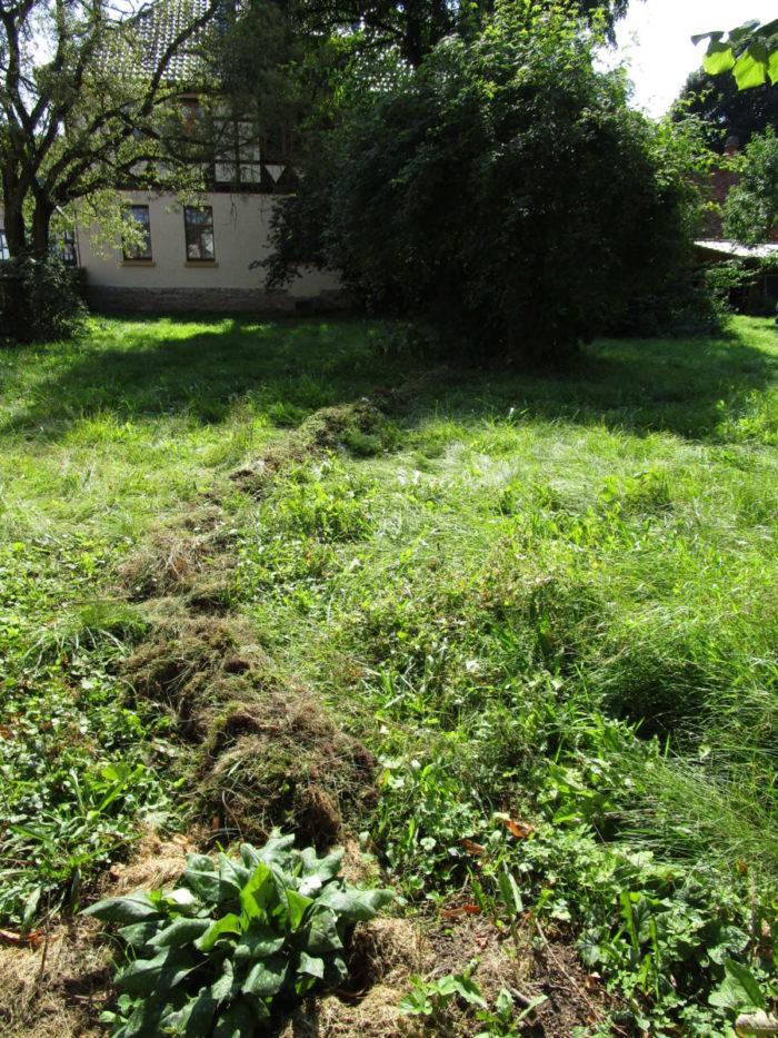 Planungsphase: Krokus- und Wildblumenwiese