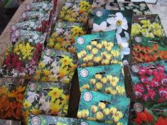 Blumenzwiebeln beim Plantenkontor Emden bestellt