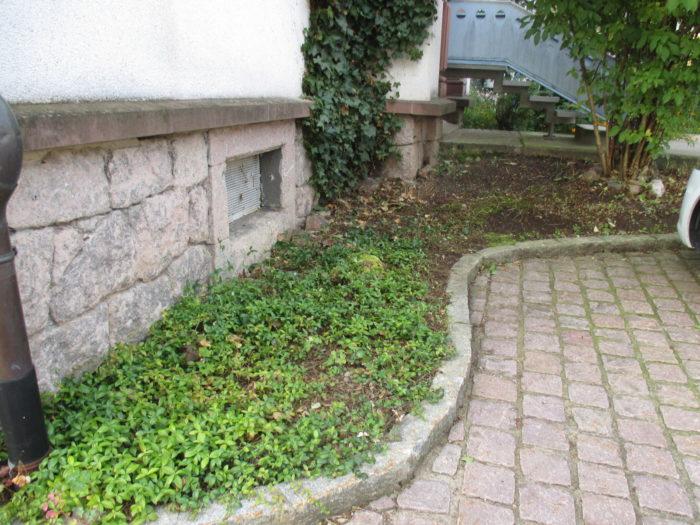 Ein verwildertes Stück Garten