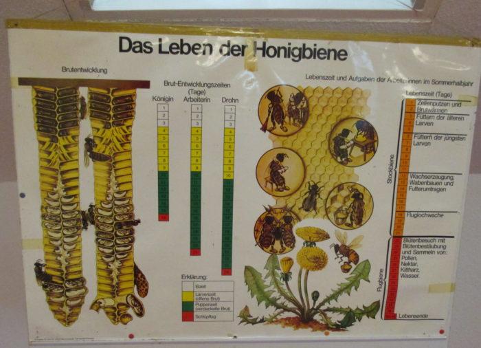 """Ferienprogramm Thema: """"Bienen"""""""