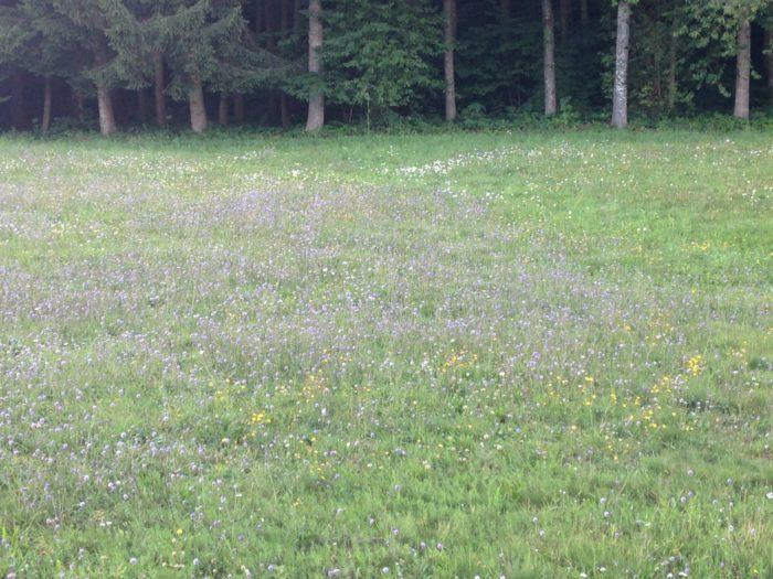Hotzenwald: Grüsse nach Berlin: Was könnte das sein ? (August)