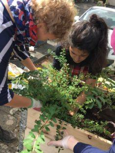 12. Bepflanzung!