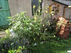 Insektenfreundliches Beet statt gefülltblühender Rosen