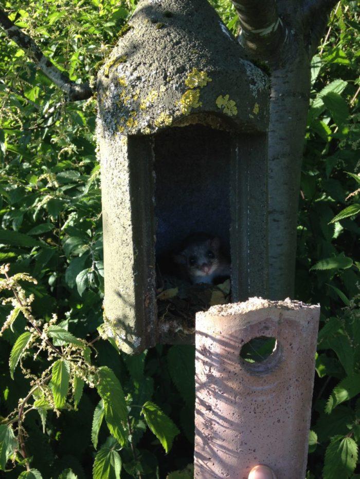 Hotzenwald: Siebenschläfer: Gleicher Kasten – ein Jahr später