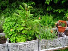 """Kräuterkisten mit Insektenunterschlupf und """"Kindergarten-Kasten"""" für Melissensämlinge"""