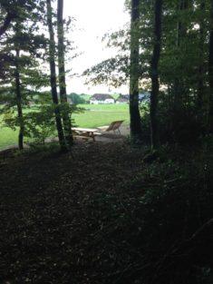 5. Hotzenwald: Durch den Wald zur Liege am Sonnenrand
