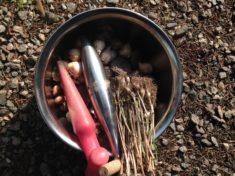 Hotzenwald Naturgarten: Wildbienen-Palettenhäuschen: Jetzt kommen die Zwiebeln