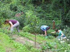 Das Team in Aktion (3/4): …und Pflegearbeiten durchgeführt.