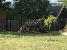 Totholzhaufen und Kätzchenweide