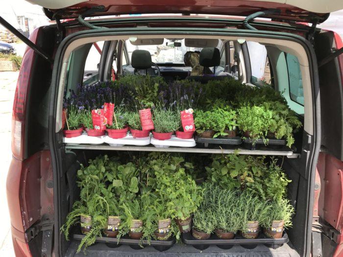 250 Pflanzen in einem Van