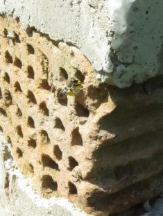 Blattschneiderbiene bezieht Eckstein