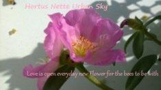 Zarte Blüten und sooo schön!