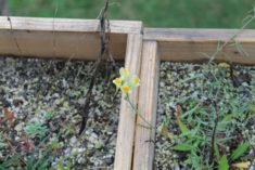 September: Letzte Blühpflanzen