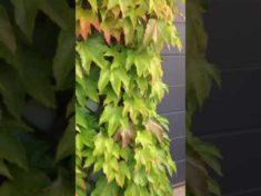 Naturgarten Hotzenwald: Video: Hausfassade mit Wilden