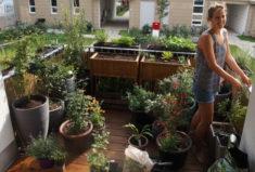 Umräumaktion Ende August, Ankunft neuer Pflanzen…
