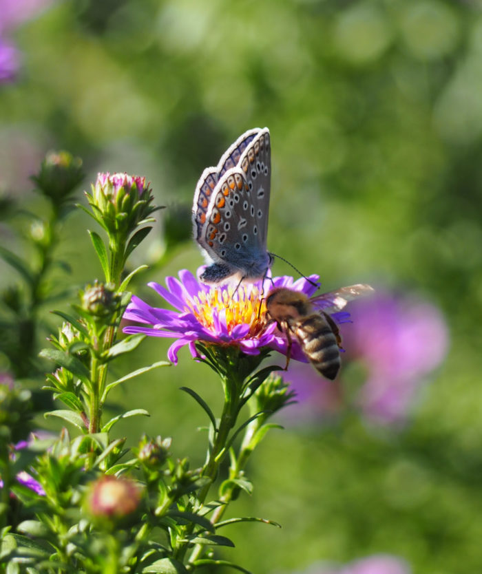 Blüten nicht nur für Bienen