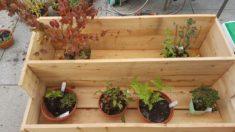 Bepflanzung des Kastens
