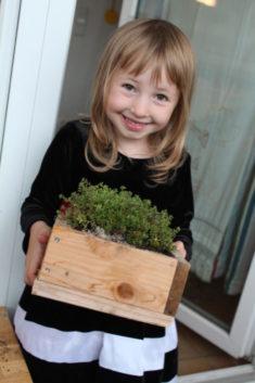Kind mit Sedum album im selbstgebauten Kasten.
